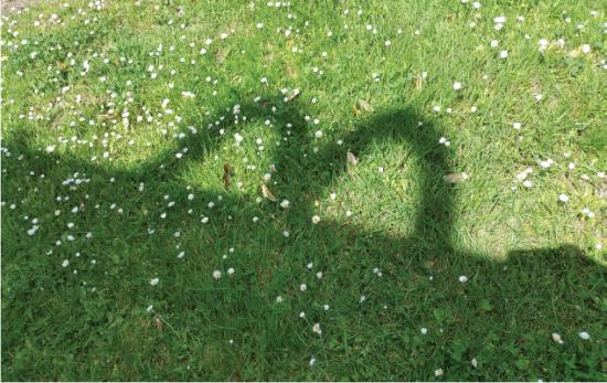 ombre-du-logo-sur-herbe.png